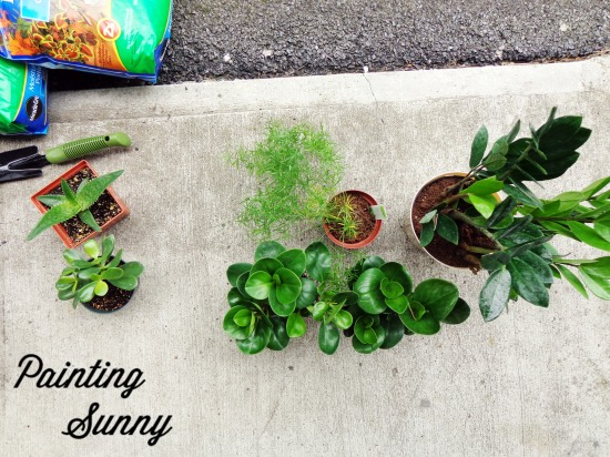 NASA wants you to have houseplants | Painting Sunny